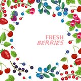 Fresh fruits and berries. Vector fruit banner. Sweet forest and. Berry and fruit background with fruity frame composed of strawberry, cherry, grape, blueberry Stock Photo