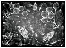 Berry Fruit, Illustratiebehang van Hand Getrokken Schets van Loganbessen en Magenta Lilly Pilly, Magenta Kers of Syzygie vector illustratie