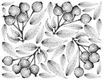 Berry Fruit, Illustratiebehang van Hand Getrokken Schets van Magenta Lilly Pilly, de Magenta Kers of Vruchten van Syzygiepanicula royalty-vrije illustratie
