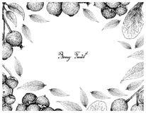 Berry Fruit, Illustratiekader van Hand Getrokken Schets van Jostaberries en Magenta Lilly Pilly, Magenta Kers of Syzygie royalty-vrije illustratie