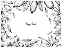 Hand Drawn Frame of Asparagus Fern Fruit and Arrayan Fruits. Berry Fruit, Illustration Frame of Hand Drawn Sketch of Fresh Asparagus Fern Fruits and Arrayan Stock Photos