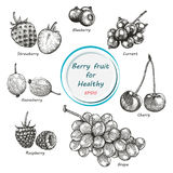 Berry fruit vector set black and white. Hand drawing vintage clip art vector illustration