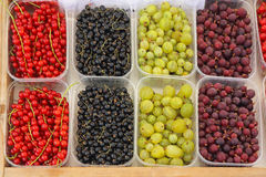 Free Berry Fruits Stock Images - 69225664