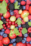 Berry fruits fresh berries collection strawberries, blueberries Stock Image