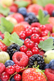 Berry fruits fresh berries collection strawberries, blueberries. Raspberries red currants leaves copyspace Royalty Free Stock Images