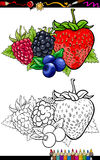 Berry fruits illustration for coloring book. Coloring Book or Page Cartoon Illustration of Four Berry Fruits like Blueberry and Blackberry and Raspberry and stock illustration