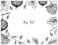 Berry Fruits, Illustration Frame of Hand Drawn Sketch Fresh Gooseberries and Golden Raspberries Isolated on White Background. Hand Drawn Frame of Gooseberries royalty free illustration