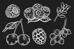 Berry Hand set. Hand drawn Berry vector set. Fruit botany illustration. Currant, raspberry, strawberry, blueberry, cherry on black background. Dessert stock illustration