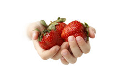 Berry in hands of the child royalty free stock photos