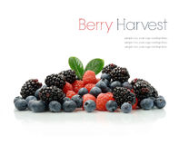 Berry Harvest. Studio image of a fresh harvest of seasonal berries against a white background with soft shadows. Copy space stock photos