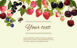 Berry horizintal banner Royalty Free Stock Photo