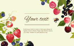 Berry horizontal banner. Vector mix berry banner. Design for tea, natural cosmetics, beauty store, dessert menu, organic health care products, perfume stock illustration
