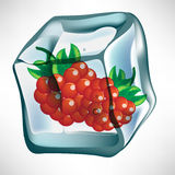 Berry in ice cube. Two frozen berry fruits in ice cube Royalty Free Stock Images