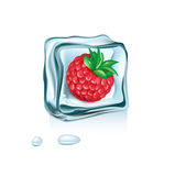Berry in ice cube melting isolated Royalty Free Stock Photos