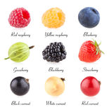 Berry images collection Stock Photography