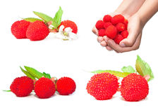 Berry images set Royalty Free Stock Photos