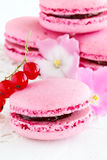 Berry macaroon Royalty Free Stock Images