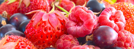 Berry Mix. Royalty Free Stock Photo