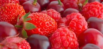 Berry mix. Stock Photos
