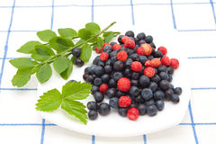 Berry mix. A mix of blueberries and strawberries with sprigs of greenery on a checkered tablecloth Stock Photography