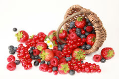Berry Mix. On a table there are strawberries, bilberries, red currants, raspberries and blackberries royalty free stock photography