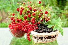 Berry mix Royalty Free Stock Photos