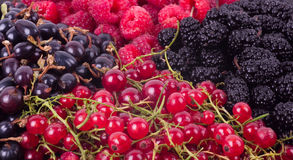 Berry Mix background Royalty Free Stock Photography