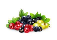 Berry Mix Realistic Concept. With leaves and branches of blueberry cranberry gooseberry   and black currant vector illustration Royalty Free Stock Photography