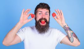 Berry mouth bearded hipster. We are what we eat. Strawberry sweet taste concept. Man handsome hipster long beard eat. Hold strawberry. Man enjoy berry taste royalty free stock photography