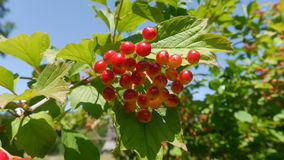 Berry. Photo taken in Kiev - Ukraine Stock Images