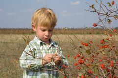 Berry-picking Stock Photos