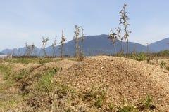 Berry Plants vulnérable protecteur Photo stock