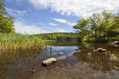 Berry pond Royalty Free Stock Image