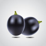 Berry of purple grapes Royalty Free Stock Images