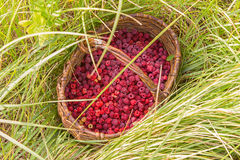 Berry raspberries in a basket on the grass Stock Image