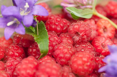 Berry raspberries closeup Royalty Free Stock Photo