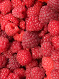 Berry raspberry Stock Images