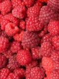 Berry raspberry Stock Images