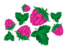 Berry raspberry Stock Photography