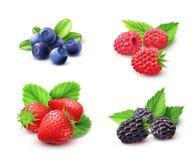 Berry Realistic Set Fotografía de archivo