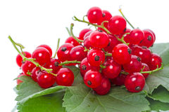 Berry of red currant Stock Image