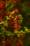 Berry. Red, green, yellow, berries on a blurred background Royalty Free Stock Image