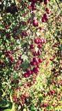 Berry Stock Photos