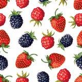 Berry seamless pattern Stock Image