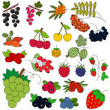 Berry set colorful. Berry set in vector, the colorful version Stock Images