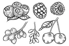 Berry set illustration. Berry set. Hand drawn sketch vector illustration isolated on white Stock Photo