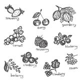 Vector set of hand drawn black and white north berries. Collection of blueberry, cranberry, cloud-berry, cherry, strawberry, curra. Nt, raspberry, rowan vector illustration