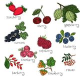 Vector berry set royalty free illustration