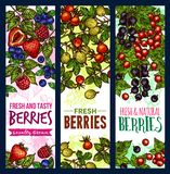 Berry branch sketch banner of wild and farm fruit. Berry sketch banner of wild and farm fruit. Fresh strawberry, blueberry and raspberry, red and black currant stock illustration