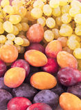 Berry still-life. Plums and grapes, close up Stock Images